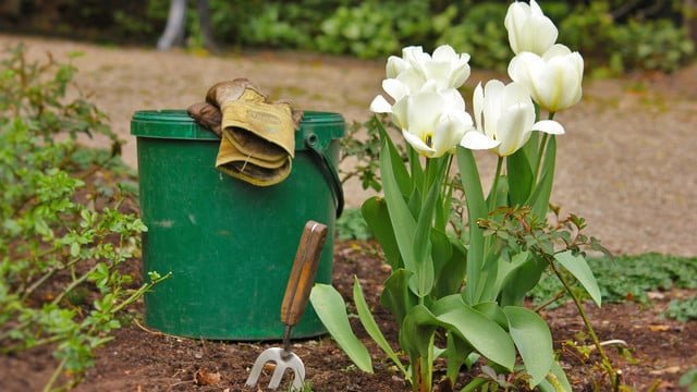Get a Green Thumb With These Apps