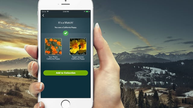 App Of The Day: Seek by iNaturalist - Get Out And Capture Nature